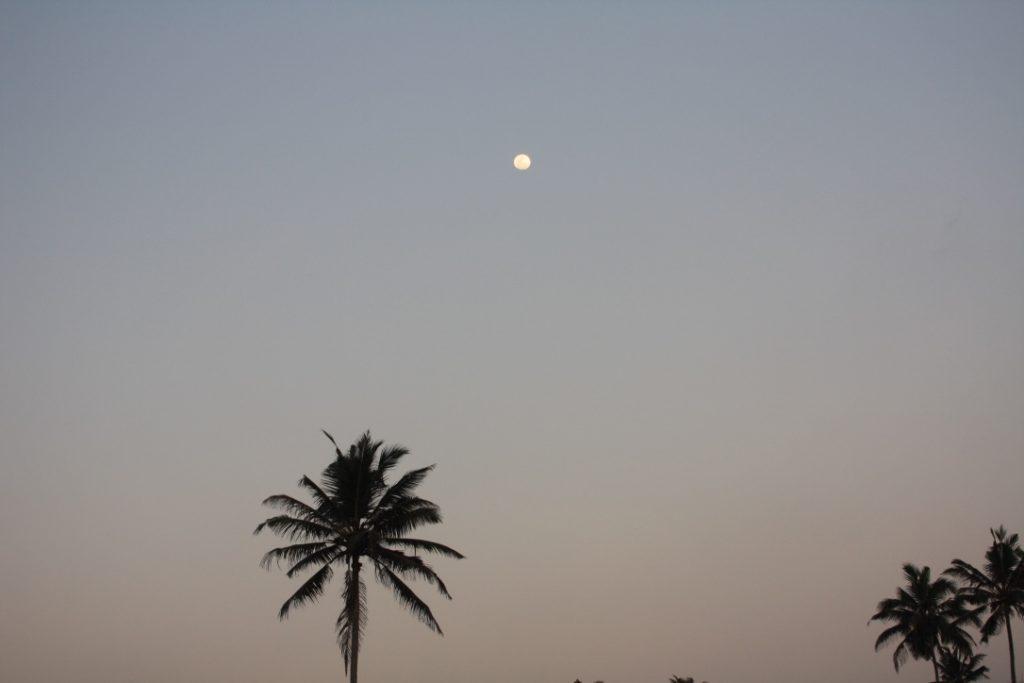 Palmenmond