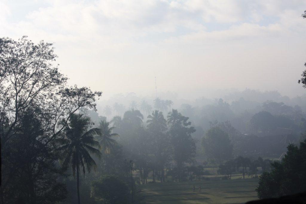 Palmenwald vom Borobudur Tempel aus