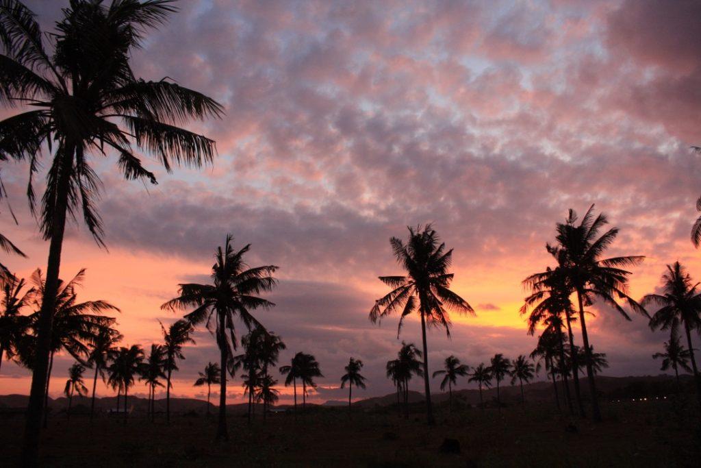 Palmen in Tanjung Aan