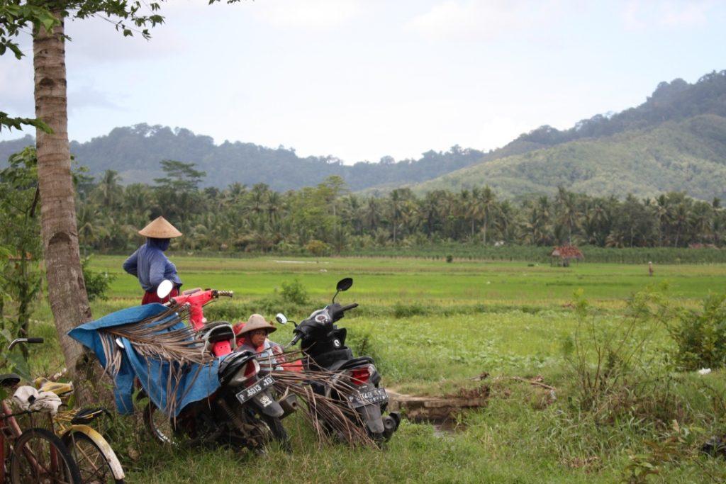 Grüne Natur auf Java